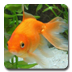 aniPetGoldfish icon