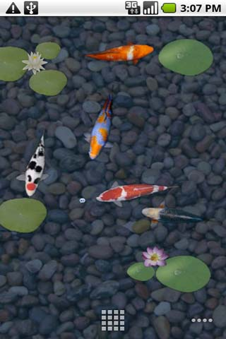 aniPet Koi screen