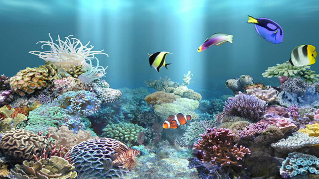 aniPet Aquarium screenshot