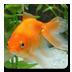 aniPetGoldfish icon